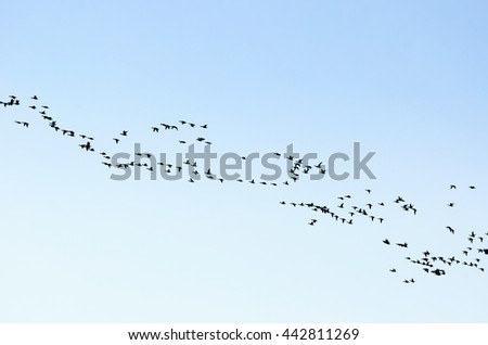 A flock of migratory birds flying high in the blue sky.