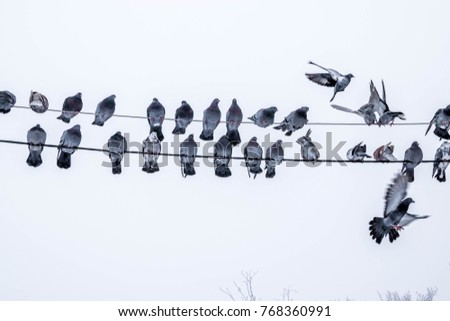 a flock of pigeons sits on wires
