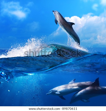 a flock of playful dolphins swimming underwater and one leaping out from big sea surfing wave - stock photo