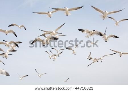 A flock of seagulls - stock photo