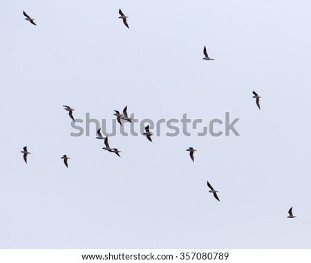 A flock of seagulls flying in the sky