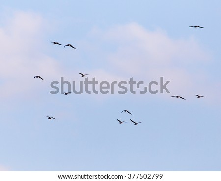A flock of seagulls flying in the sky - stock photo