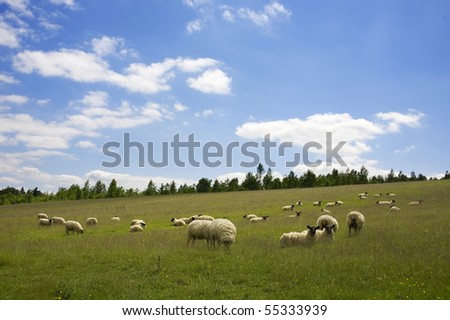 A flock of sheep in a field on a bright summer day.