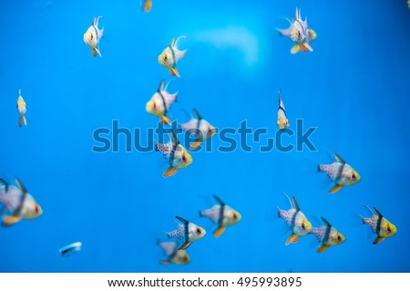 A flock of small beautiful fish on a blue background
