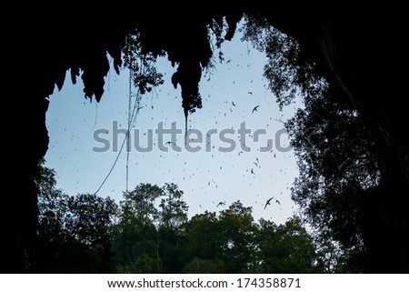 A flock of swifts flying at the Lod cave entrance - stock photo