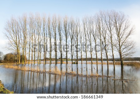 A flooded field with trees in Wareham,Dorset,UK.