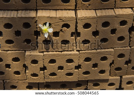 A flower emerge between a brick laid on top of each other with ray of light shining through