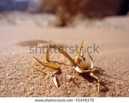 A flower in the desert. - stock photo