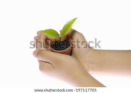 A Flower Pot On The Hand Of A Child