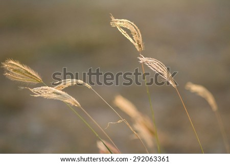 A  flower with soft focus  flow follow the wind during sunset . - stock photo