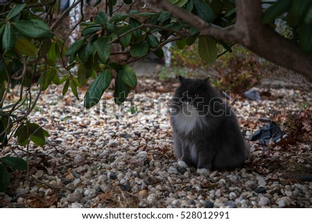A fluffy gray cat sitting under the tree
