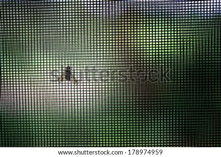 A fly beneath insect-proof netting over a window, a must-have to help prevent tropical diseases in Sub-Saharan Africa and elsewhere. - stock photo