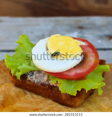 A fly sits on the sandwich. - stock photo