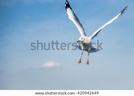 A Flying Seagull in the blue sky with clouds backgrounds spreading wings and looking left leaving spaces for words, letters and quotes. - stock photo