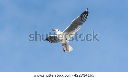 A Flying Seagull stop in the air look left for people feeding him with blue sky and clouds. - stock photo