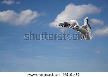 A flying seagull with wings spread wide