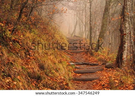 A foggy Appalachian Trail at Newfound Gap in Great Smokey Mountains National Park