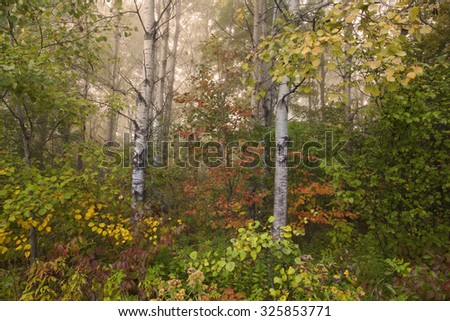 A foggy autumn morning in Springside Park in the Berkshire Mountains of Western Massachusetts. - stock photo