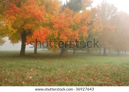 A foggy fall day in the midwest showcases the bright orange and red colors of the fall season. - stock photo