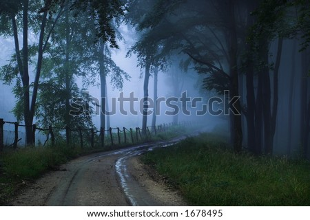 A foggy, mystical forest. - stock photo