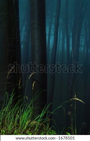 A foggy, mystical forest. - stock photo