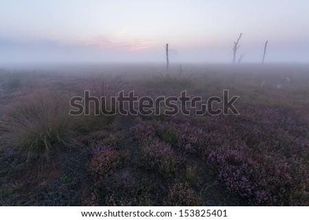 A foggy sunrise on the heather - stock photo