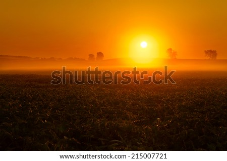 A foggy sunrise over a bean field in the Midwest United States. - stock photo