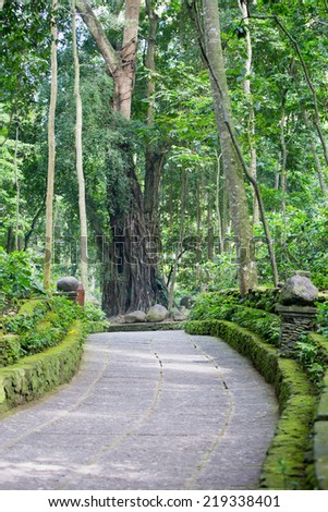 A footpath in Monkey Forest Sanctuary in Ubud, Bali,Indonesia - stock photo