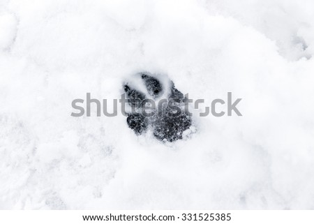 a footprint from a dog in the snow - stock photo