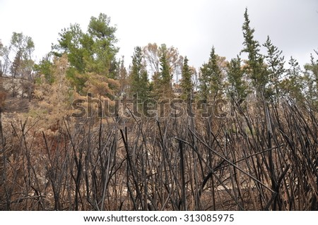 A forest after a fire - stock photo