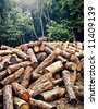 A forest and its future, a bunch of logs. - stock photo