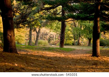 a forest in autumn - stock photo