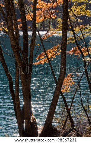 A forest lighted by the sun in front of blue lake - stock photo