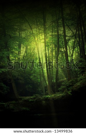A forest of mystery, magic, enchantment, and maybe some hobbits. - stock photo