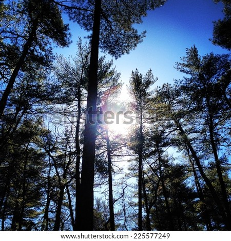 A forest of trees under a sunny blue sky. - stock photo