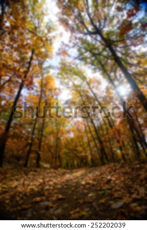 A forest trail in the fall with sunlight coming through colorful trees, blurred background - stock photo