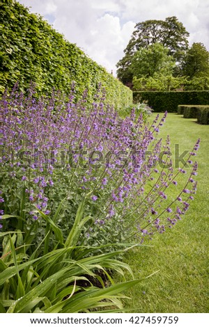 A formal English country garden - stock photo