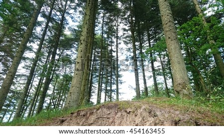 A forrest in Denmark near Tversted - stock photo