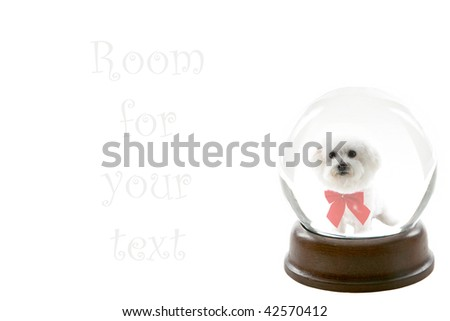 a fortune teller crystal ball, shows a ghostly image of a bichon frise dog as your future pet, isolated on white, with room for your text - stock photo