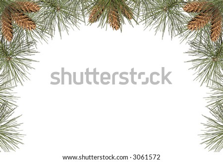 a frame of pine needles and pine cones - stock photo