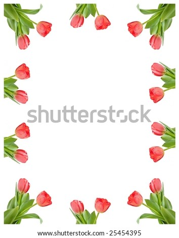 A frame of tulips isolated on white background - stock photo