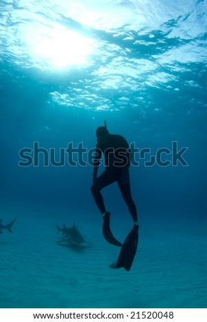 A freediver ascends back to the surface after spending some time interacting with Lemon Sharks - stock photo