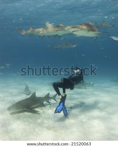 A freediver bends over backwards to get a shot of Lemon Sharks (Negaprion brevirostris) circling overhead - stock photo