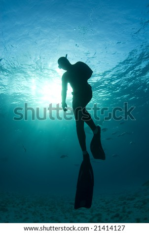 A freediver, silhouetted by the sun shining through from the surface, takes one last look as he begins his ascent to the surface - stock photo