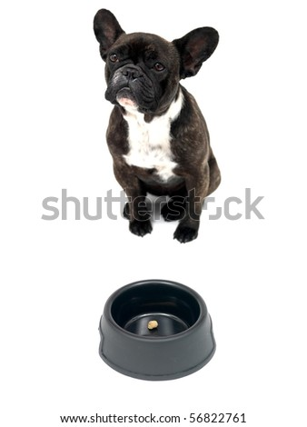 A French Bulldog in front of a dog bowl isolated against a white background - stock photo