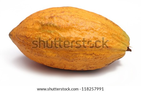 A fresh cacao pods isolated on a white background - stock photo