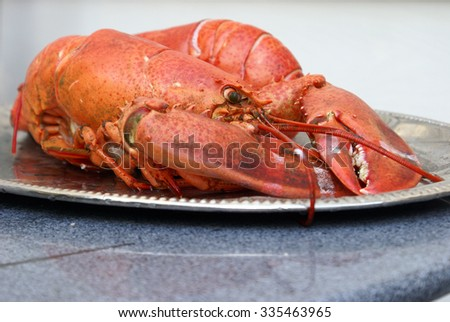 A fresh east coast Canadian lobster is being prepared on a platter for consumption. - stock photo