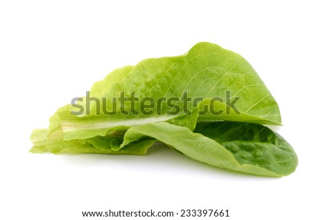 A fresh salad leaves on white