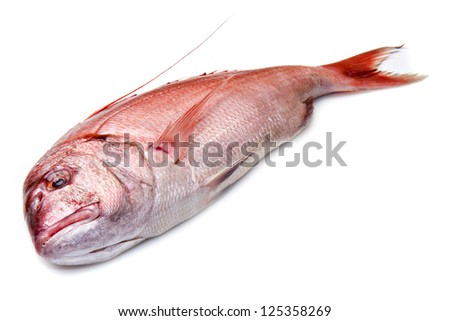 a fresh snapper red fish isolated in white background - stock photo