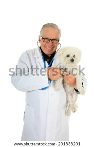 A friendly Veterinarian holds a Pure Breed Bichon Frise dog as he checks her Heart and Lungs with his Stethoscope.  Isolated on white with room for your text. - stock photo